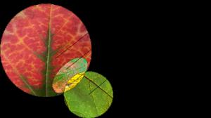 Sustainable Design - Design Types Venn
