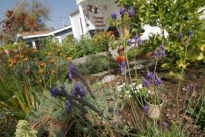 Southern California permaculture garden