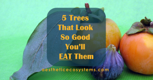 5 Trees That Look So Good You'll Eat Them
