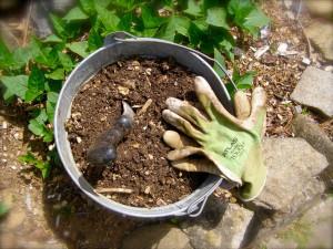 compost bucket soil amendment
