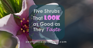 Five Shrubs That Look as Good as They Taste