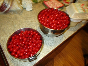 Nanking cherries picked
