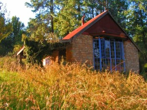 Prairie grasses wave before a house