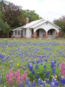 Wildflower meadow garden