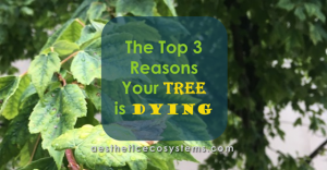 The top 3 reasons your tree is dying