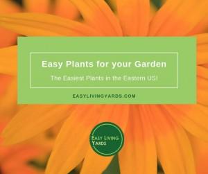 Easy Perennial Plants for your garden
