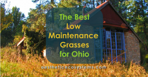 The Best Low Maintenance Grass for Ohio