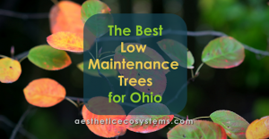The Best Low Maintenance Trees for Ohio