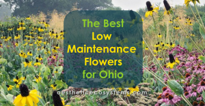 The Best Low Maintenance Flowers for Ohio