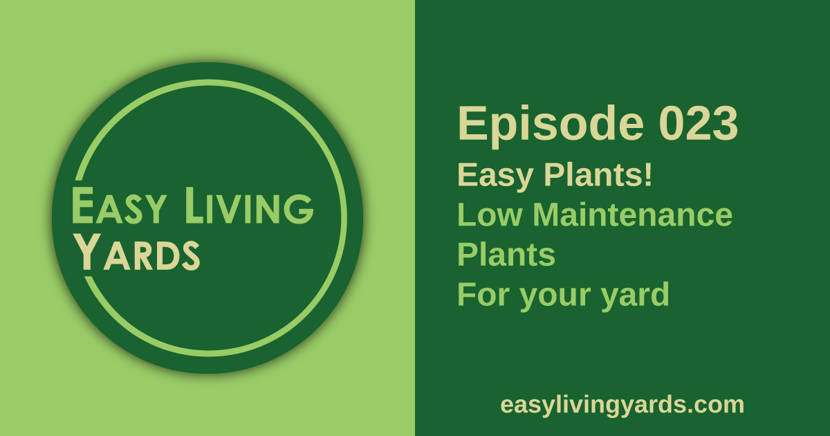 Easy Plants: Low Maintenance Landscaping Plants for your Yard