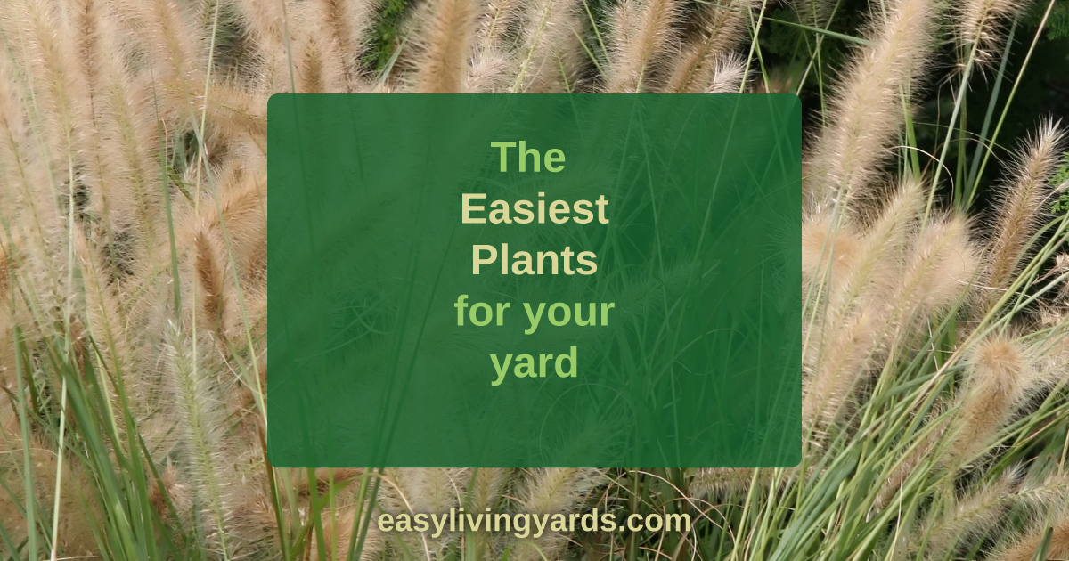 easy low maintenance plants for your yard