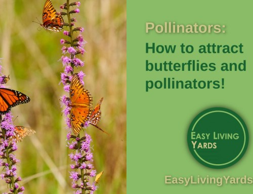 Butterfly gardens and Pollinator Gardens