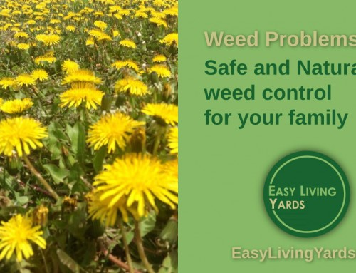 Safe and Natural Weed Control – ELY 067