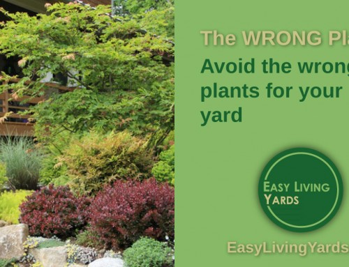 Avoid the WRONG plants – ELY 068