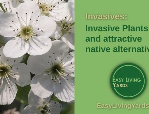 Invasive plants to avoid in your yard – ELY070