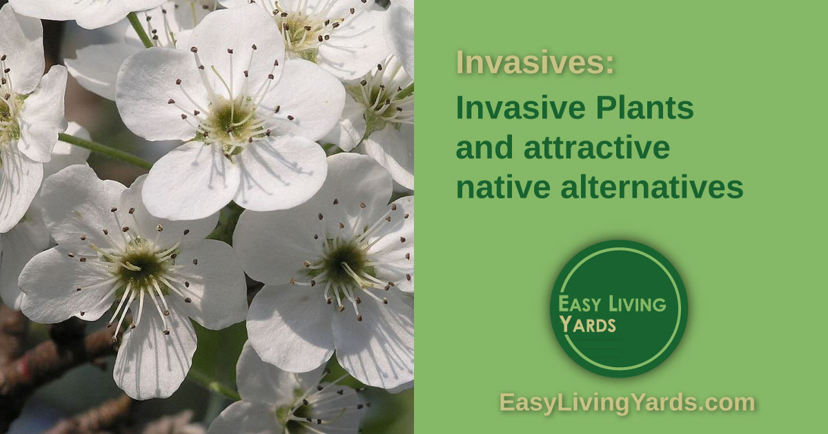 ELY 070 Invasive Plants and native plant alternatives