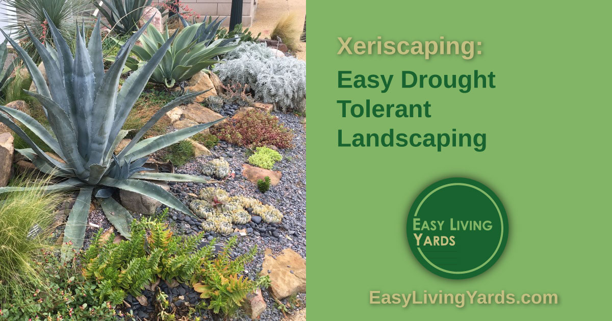 ELY074-Xeriscaping