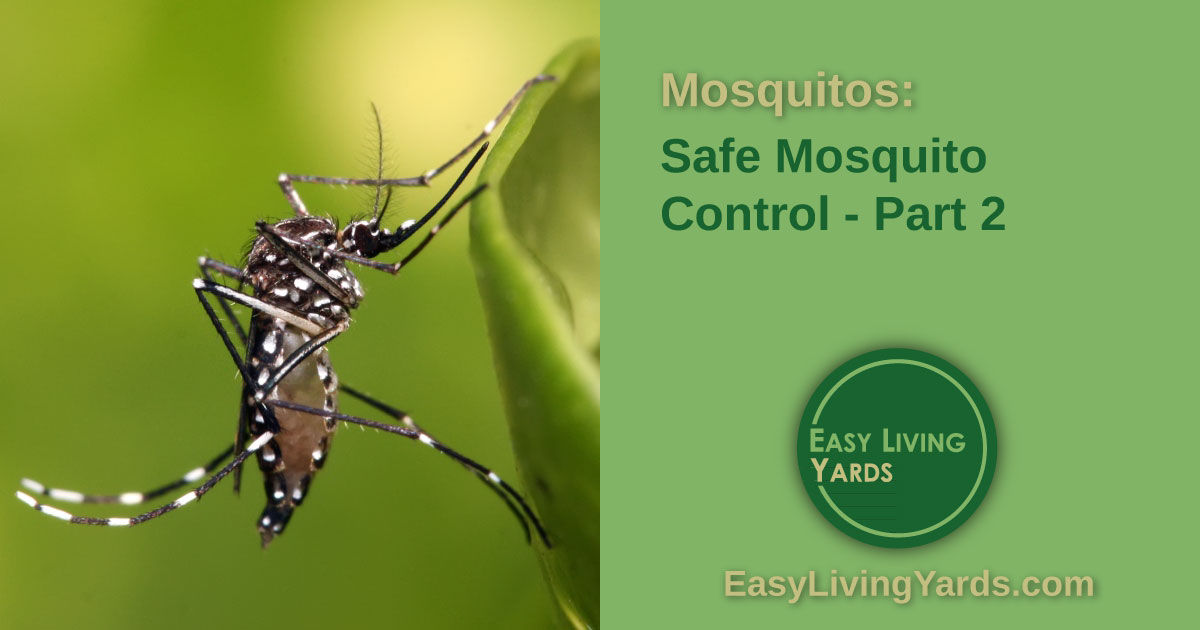 Safe mosquito control - part 2