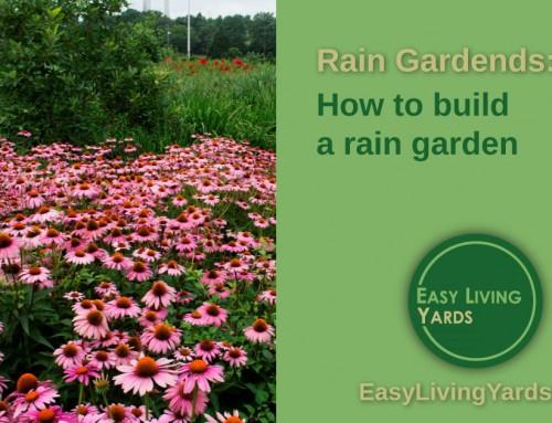 Rain Garden Design – ELY 077