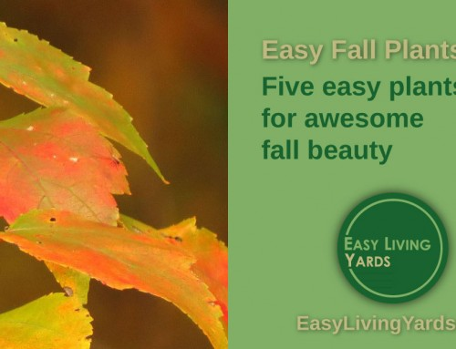 Awesome Fall Garden Plants-ELY086
