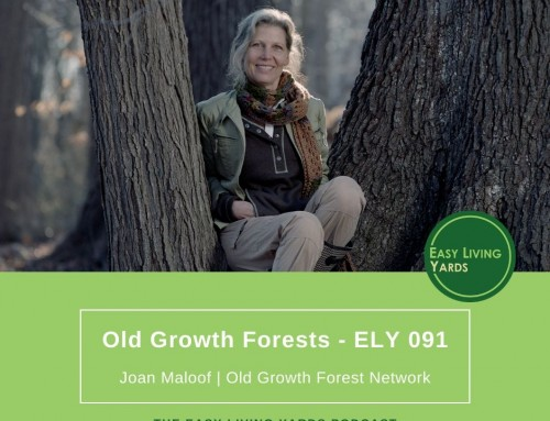 Old Growth Forests-ELY091