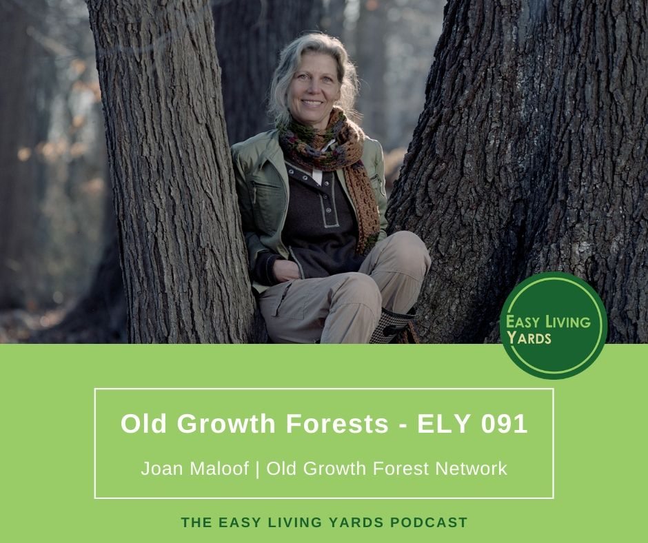 ELY091 - Joan Maloof of the Old Growth Forest Network