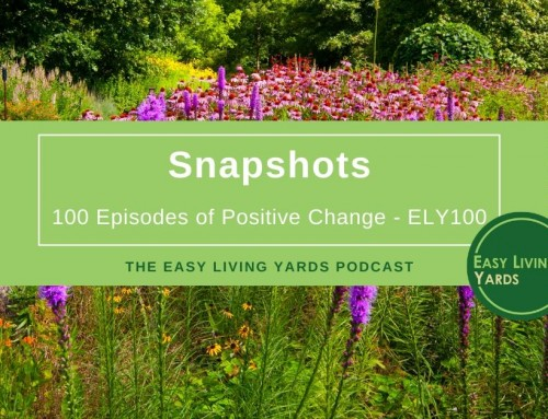 Snapshots-ELY100