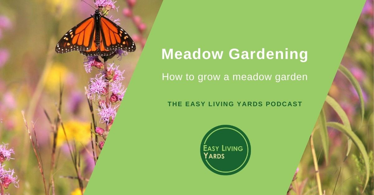 Meadow Gardening - how to create a prairie garden