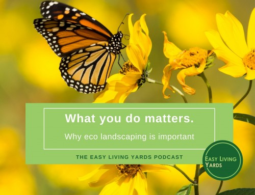 Ecological Landscaping – You can make a difference ELY108