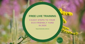 Five Easy Steps to an Eco Friendly Yard in 2020