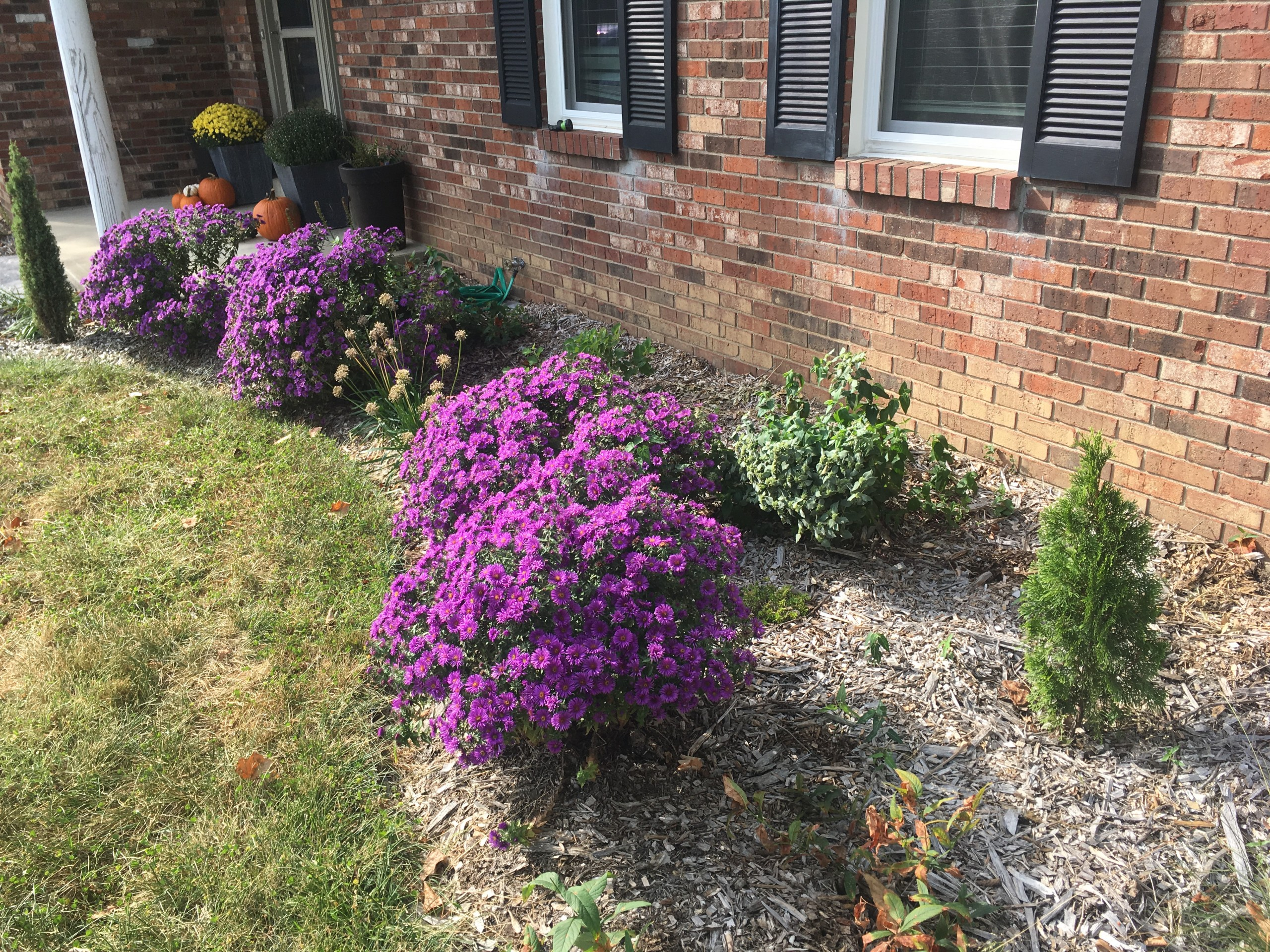 Native Landscaping - fall color