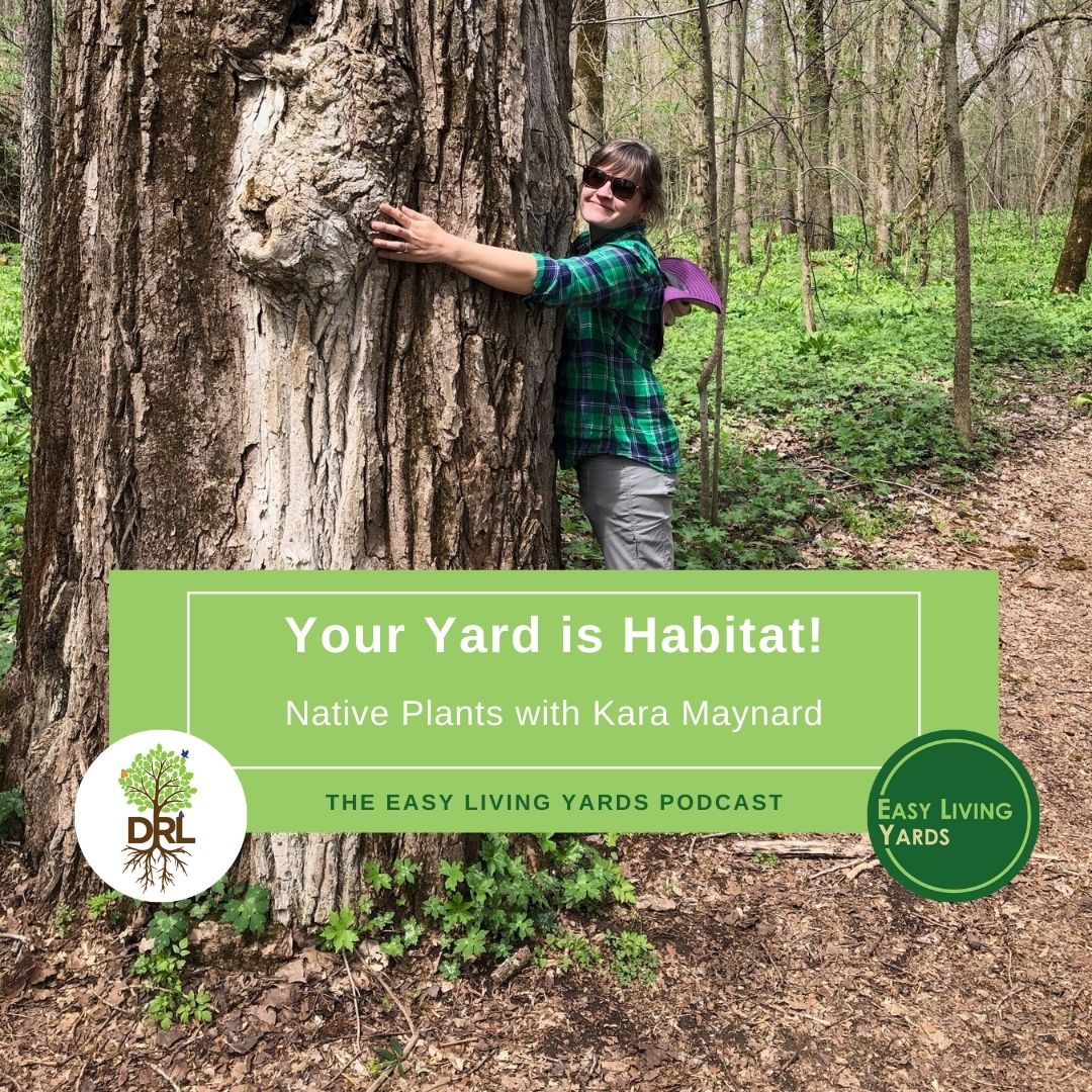 Your Yard is Habitat with Kara Maynard of Deeply Rooted Landscapes