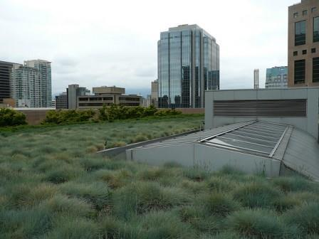 A planted roof for absorbing and retaining rainwater