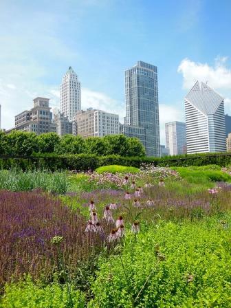 Lurie Garden in Millennium Park - The beginnings of an urban forest