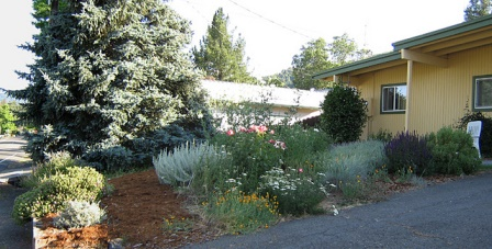 Mixed plantings of various height and species in a residential yard