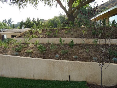 Terracing in a front yard